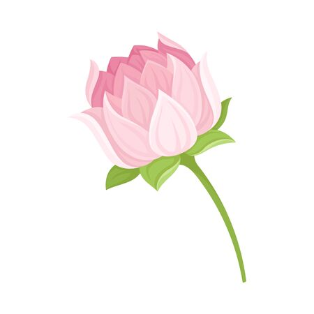 Semi-closed Waterlily Bud With Pink Petals and Floral Stem Vector Illustration. Botany Decorative Element Concept