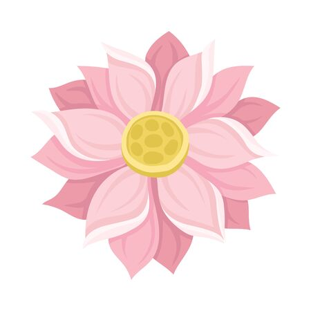 Waterlily Scaled Pink Flower With Petals Vector Illustration. Aquatic Beautiful Element