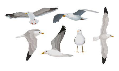 Gabbiani grigi con estremità nere delle ali in diverse pose. In piedi, in volo, in planata, con grande diffusione. Insieme dell'illustrazione di vettore, isolato su priorità bassa bianca. Vettoriali