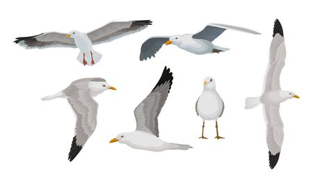 Grey seagulls with black ends of wings in different poses. Standing, flying, gliding, with great spread. Vector illustration set, isolated on white background. Vektoros illusztráció