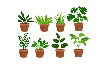 Green home plants in red ceramic pots, settled in two rows. Eight different indoor flowers vector illustration set, for interior or other design. Isolated, on white background.