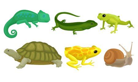 Animales de sangre fría, anfibios y reptiles, tortuga enorme, caracol grande, rana arborícola Hylidae, camaleón, lagarto, rana tropical venenosa. Concepto de vida silvestre Ilustración de vector