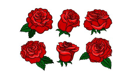 Beautiful red roses in tattoo style, bright with yellow shadows, green leaves and black outline. Old school type. Vector illustration set, isolated on white background.