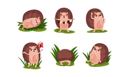 Set of six funny hedgehogs in different actions and poses. Sleeping, collecting the mushrooms, catching the butterfly, resting after dinner. Vector illustration, isolated on white background. Ilustrace
