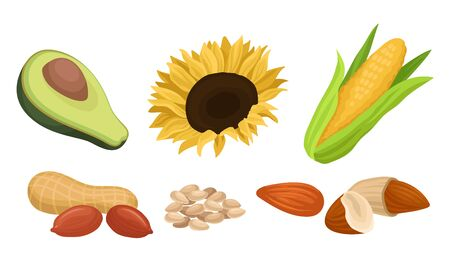 Raw ingredients for vegetable oils. Fresh green avocado, bright sunflower and seeds, ear of sweet corn, inshell peanuts, almonds. Culinary concept. Illustration