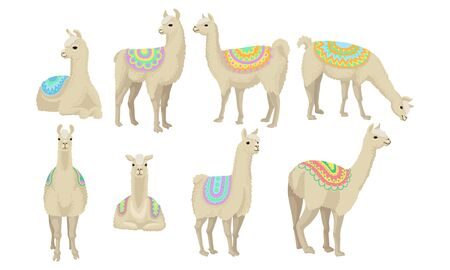 Set of eight adult llamas in bright colorful blankets, stay in different poses. Adult animals whom fur is a raw material for highly estimated wool. Vector illustration set, isolated, white background.