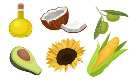 Vegetable oil in a bottle and raw materials for it, such as aromatic coconut, exotic avocado, bright sunflower with seeds, green olives, ear of sweet corn. Culinary concept Ilustração