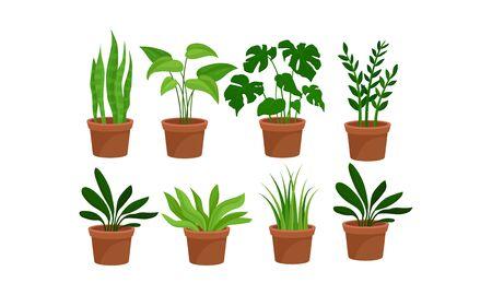 Grüne Hauspflanzen in den Töpfen-Vektor-Illustrations-Satz
