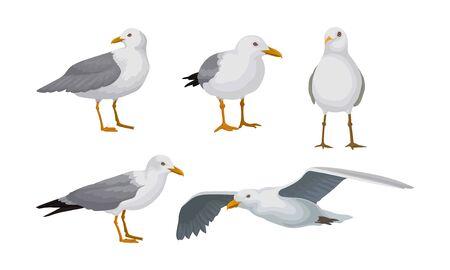 Les mouettes grises se tiennent dans différentes poses et volent ensemble d'illustrations vectorielles Vecteurs