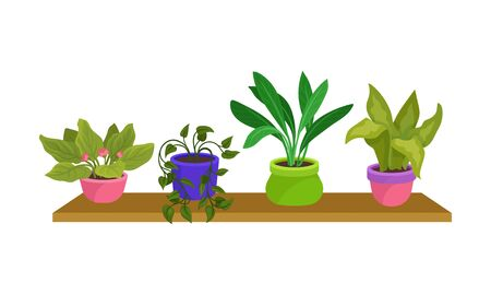 Four Green Houseplants In Colorful Pots Vector Illustration Set