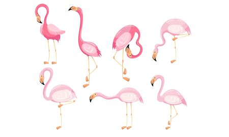Beautiful Flamingo Vector Set Isolated On White Background. Colorful Tropical Birds in Different Poses Collection