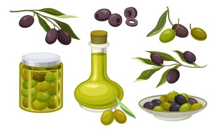 Green and Black Olives Healthy Products With Bottle of Virgin Traditional Cooking Oil Vector Set Çizim