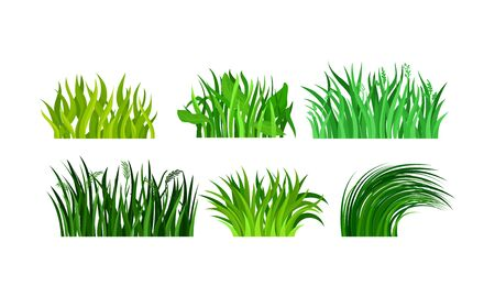 Six types of fresh and green tufts of grass. Different kind of plants and grass patterns. Vector illustration set, isolated, on white background.