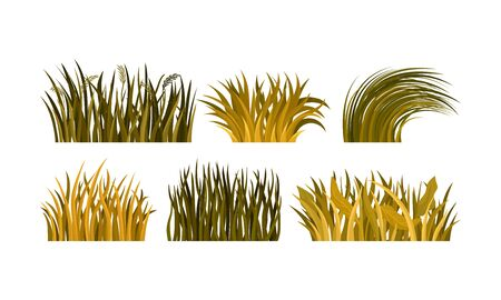 Different Kind Of Yellow And Brown Autumn Grass Tufts Vector Illustration Set