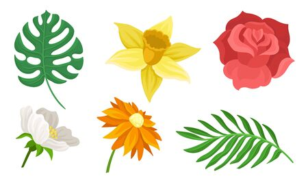 Set of different flowers and leaves. Vector illustration on a white background.
