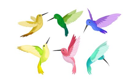Small Bright Colorful Hummingbirds Flying And Sitting Vector Illustration Set Illustration