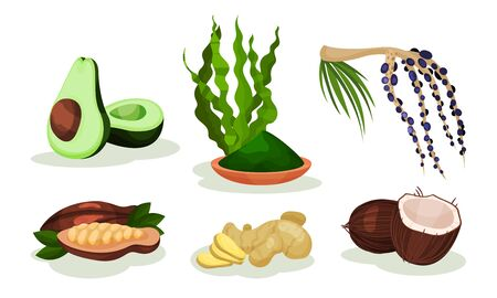 Set of exotic fruits and plants. Vector illustration.