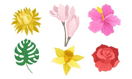 Set of flowers and leaves. Vector illustration on a white background. Banco de Imagens - 133682220