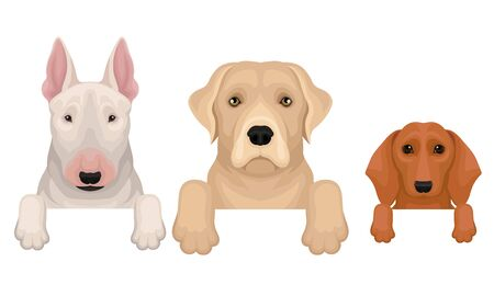 Set of bull terrier, labrador and dachshund heads. Vector illustration on a white background.