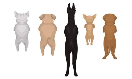 Dogs of the breed Doberman, Bulldog, Pug, Chihuahua are standing on their hind legs. Back view. Vector illustration on a white background. Illustration