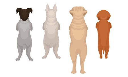 Dogs of the breed Labrador, Bull Terrier, Dachshund stand on their hind legs. Back view. Vector illustration on a white background.