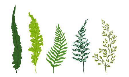 Farne eingestellt. Botanische detaillierte vektor illustrierte Sammlung