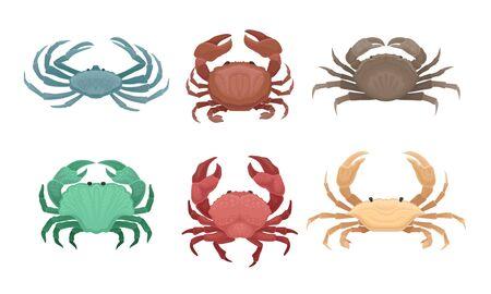 Bundle of Different Types of Crabs Vector Set