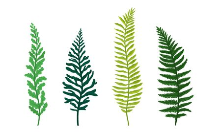 Ferns Set. Botanical Detailed Vector Illustrated Collection
