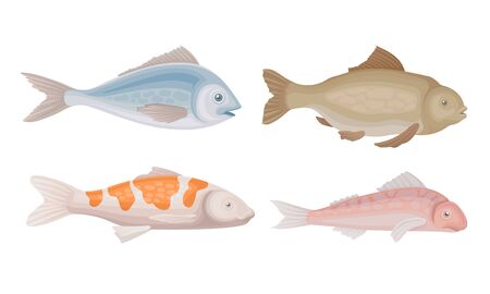 Realistic Marketable Fish Vector Set. Various Sorts of Fresh Fish Collection Vettoriali