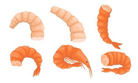 Set of boiled shrimp. Vector illustration on a white background.