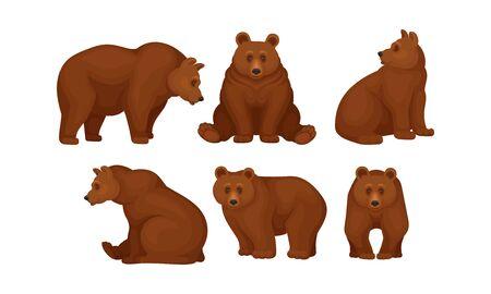 Ensemble vectoriel d'ours bruns assis et debout Vecteurs