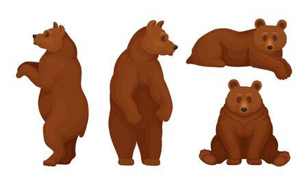 Ensemble vectoriel d'ours bruns assis et debout