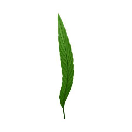 Fern Plant Decorative Leaf Isolated On White Background