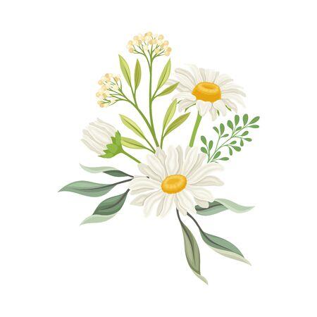 Bouquet of Daisy Flowers Vector Composition. Natural Floral Decoration. Meadow Plant Concept