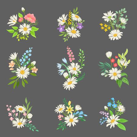 Chamomile or Daisy Bouquets Vector Set. Botanical Decoration Concept. Floral Collection
