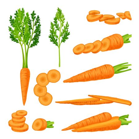 Whole and Cut into Slices Carrot Vector Set Vetores