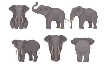 Realistic Detailed African Huge Mammals Vector Set Иллюстрация