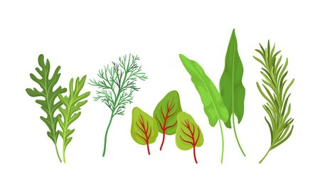 Herbs Used in Culinary and Cooking Vector Set. Aromatic Cuisine Greenery Collection