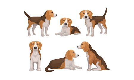Detailed Beagle Dog in Different Poses Vector Set Vectores