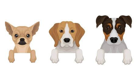 Chihuahua, Terrier and Basset peep out. Vector illustration on a white background.