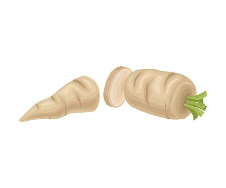 Parsnip Root Cut into Two Halves Vector Item. Cooking Agricultural Ingredient Foto de archivo - 134600614