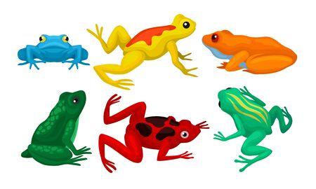 Frosch-Sammlung, nette amphibische Tiere der verschiedenen Farben-Vektor-Illustration