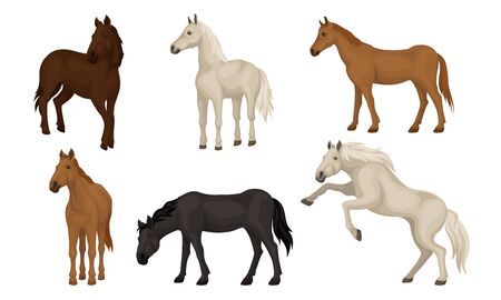 Horse Breeds Set, Beautiful Horses of Different Colors Vector Illustration Stock Vector - 135018092