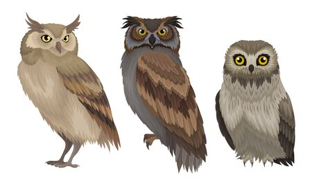 Different Species of Owls Collection, Wild Forest Predatory Birds Vector Illustration on White Background.