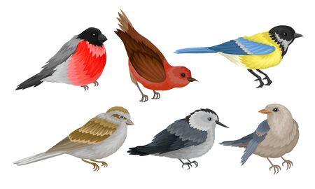 Wild Birds Collection, Titmouse, Bullfinch, Sparrow Vector Illustration on White Background.
