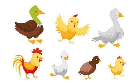 Farm Birds Collection, Poultry Chicks Breeding Duck, Rooster, Goose, Chicken Vector Illustration on White Background.