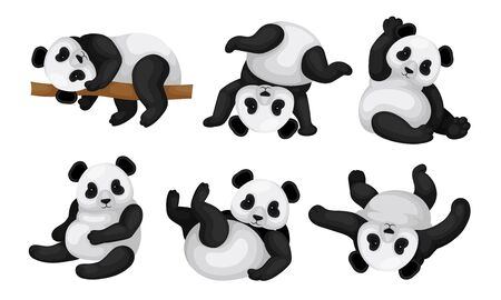 Panda Animal in Different Poses Vector Set. Bear Lying on the Tree and Turning Upside-down on the Ground Illusztráció