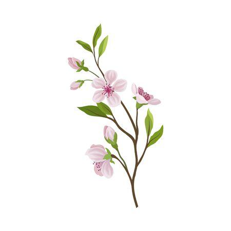 Almond Branch with Flowers and Buds Vector Illustration. Pink Floral Blossom Decoration Reklamní fotografie - 135461154