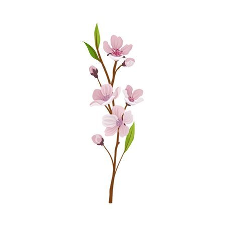 Almond Branch with Flowers and Buds Vector Illustration. Pink Floral Blossom Decoration Reklamní fotografie - 135462860
