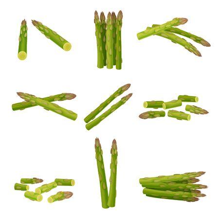Świeże zielone szparagi włócznie wektor zestaw z rozproszonymi łodygami. Koncepcja ekologicznego surowego wegetariańskiego produktu Ilustracje wektorowe